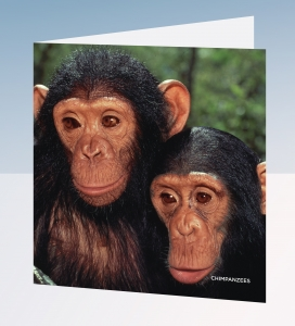 Chimpanzee cards - Really Wild Cards