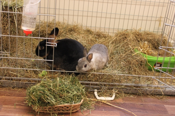 Bring outdoor rabbits into an unheated room for satefy