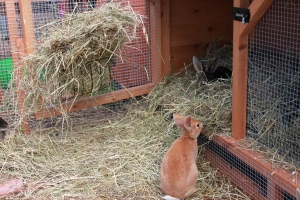 Rabbits abandonement increases to 67,000