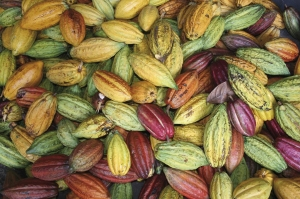 Cocao Pods at Hotel Chocolat