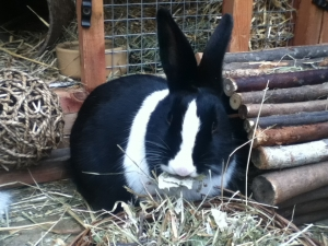 A rabbit's diet should consist of mainly hay/grass.